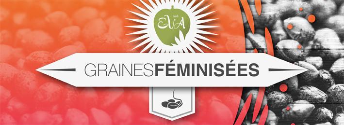 Graines Feminisees Eva Seeds