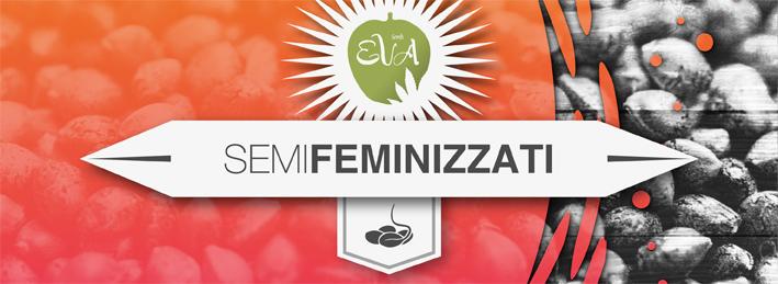 Semi Feminizzati Eva Seeds