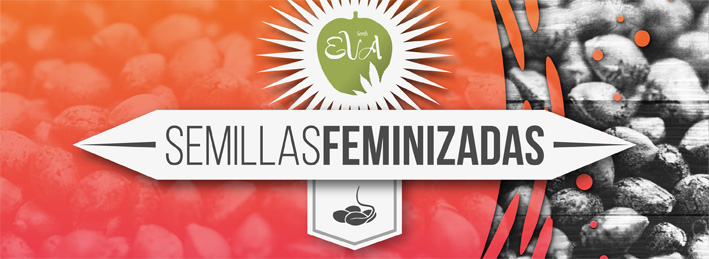 Semillas feminizadas Eva Seeds