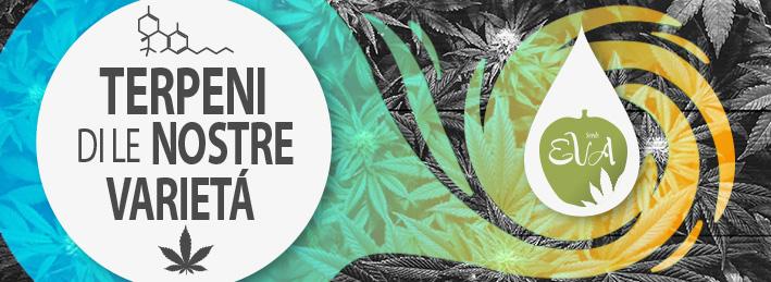 Terpeni Cannabis Eva Seeds