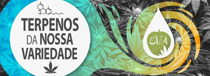 Terpenos Maconha Eva Seeds