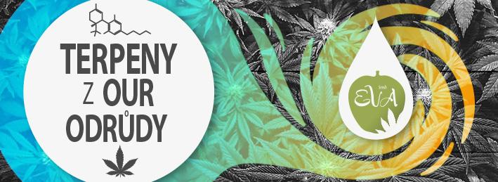 Terpeny Marihuany Eva Seeds
