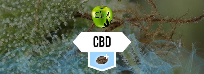 Productos CBD
